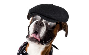 Picture glasses, cap, boxer