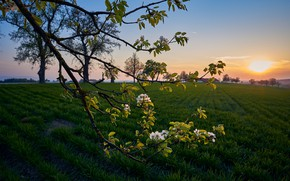 Picture field, landscape, nature, dawn, branch, spring, morning, flowering