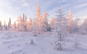 Picture cold, winter, frost, forest, the sky, light, snow, landscape, nature, purity, in the snow, snow, …