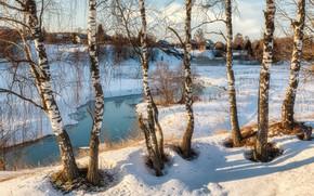 Picture snow, trees, landscape, nature, home, spring, village, birch, Bank, river, Евгений Ерохин
