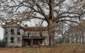 Picture house, tree, naturalism