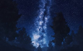 Picture the sky, trees, night, the milky way