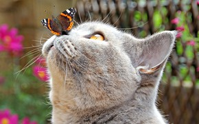 Picture cat, cat, close-up, butterfly, muzzle, bokeh
