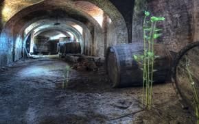 Picture background, cellar, barrels