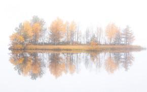 Picture autumn, trees, fog, island