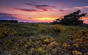 Picture sunset, flowers, meadow, Pascal Lechaudel have