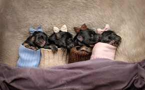 Picture puppies, socks, bows, crumbs