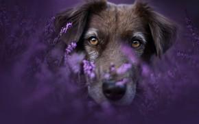 Picture summer, flowers, portrait, dog, Spring