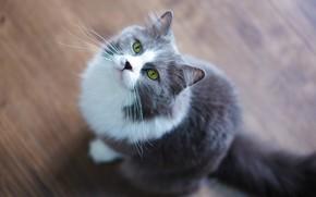 Picture cat, cat, grey, floor, sitting, view
