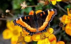 Picture macro, flowers, butterfly, yellow, bokeh
