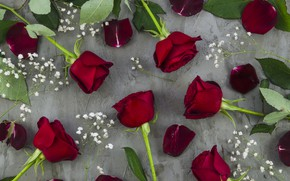 Picture flowers, roses, grey background, buds