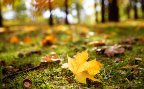 Picture autumn, leaves, light, yellow, Park, glade, bokeh, blurred background, maple, autumn leaf
