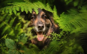 Picture each, dog, fern