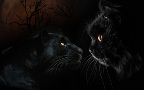 Picture Mustache, Cats, Cat, Panther, Eyes, Two, Pussy, Animals, Black, The dark background, Side, Большие Кошки