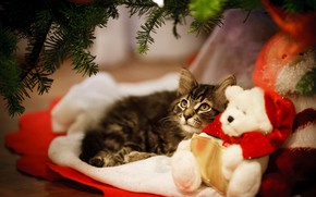 Picture cat, kitty, toy, bear, New year, kitty, Teddy