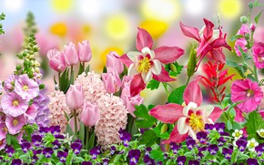 Picture Graphics, Flowers, tulipan