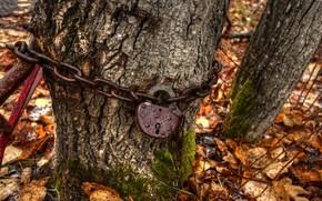 Picture castle, tree, chain