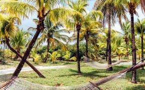 Picture tropics, palm trees, hammocks