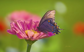 Picture flower, macro, butterfly
