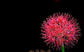 Picture flower, background, ball
