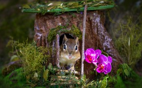 Picture grass, flowers, muzzle, house, Chipmunk, orchids, stump, rodent