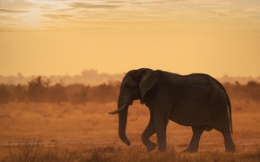 Picture field, the sky, sunset, elephant, silhouette, profile, walk