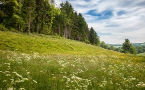 Picture greens, forest, summer, the sky, grass, clouds, flowers, dal, ate, slope, hill, meadow, haze, pine, …