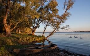 Picture autumn, trees, landscape, nature, lake, shore, boat, swans, Tamara Andreeva