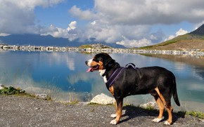 Picture language, look, light, landscape, mountains, nature, pose, reflection, shore, dog, profile, is, pond, Bernese mountain …