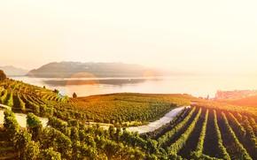 Picture the sun, lake, Switzerland, terrace, the vineyards, Canton, Lavaux, Laveau
