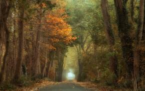 Picture autumn, trees, alley, trees, autumn, alley, Anton van Dongen