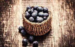 Picture Board, blueberries, berry, basket, bokeh