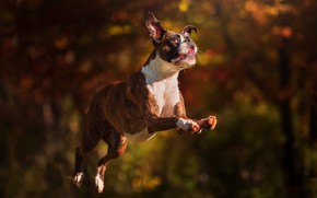 Picture each, jump, dog