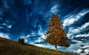 Picture the sky, clouds, tree, Germany
