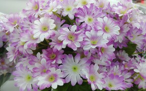 Picture Flowers, flowering, pink and white