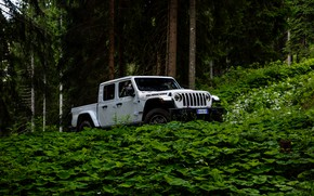 Picture white, SUV, pickup, Gladiator, 4x4, Jeep, Rubicon, in the woods, 2019