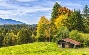 Wallpaper Nature, Trees, Forest, Landscape, Hut
