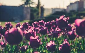 Picture Flowers, Flower, Purple, Beautiful, Flowers, Blur, Flora, Blooming, Flora, Delicate, Purple Flowers, Close-Up