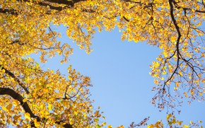 Picture autumn, the sky, leaves, trees, yellow, autumn, leaves, tree, autumn