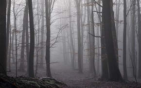 Picture autumn, forest, nature, fog, twilight