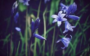 Picture Flowers, Flower, Plant, Plants, Flower, Flowers, Flora, Plants, Close-up, Blooming, Bloom, Flora, Plant, Suzy Hazelwood, …