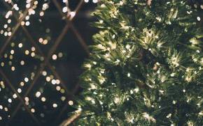 Picture winter, light, branches, the dark background, holiday, lights, Christmas, New year, tree, garland, needles, bokeh, …