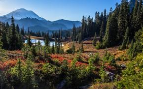 Picture trees, landscape, mountains, nature, lake, USA, national Park, Mount Rainier, Mount Rainier, Tipsoo Lake