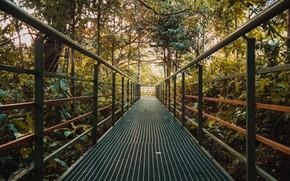 Picture trees, bridge, nature, plants, the bushes, iron