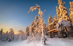 Picture winter, frost, forest, snow, trees, nature, Park, hut, ate, path, entrance, winter, blue sky, Christmas …