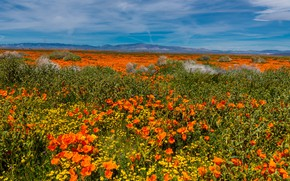 Picture road, the sky, the sun, clouds, flowers, mountains, field, USA, the bushes, Lancaster