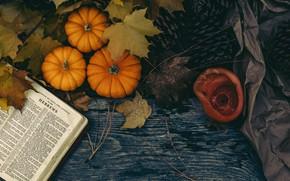 Picture the dark background, Board, pumpkin, book, bumps