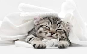 Picture cat, kitty, sleep, sleeping, toilet paper