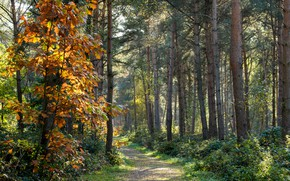 Picture autumn, forest, trees, nature, path