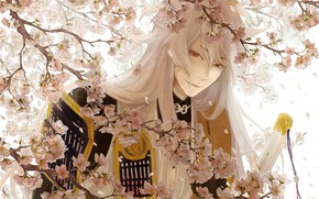 Picture flowers, branches, spring, anime, art, guy, Touken ranbu, Dance Of Swords